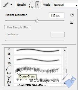 select dune grass